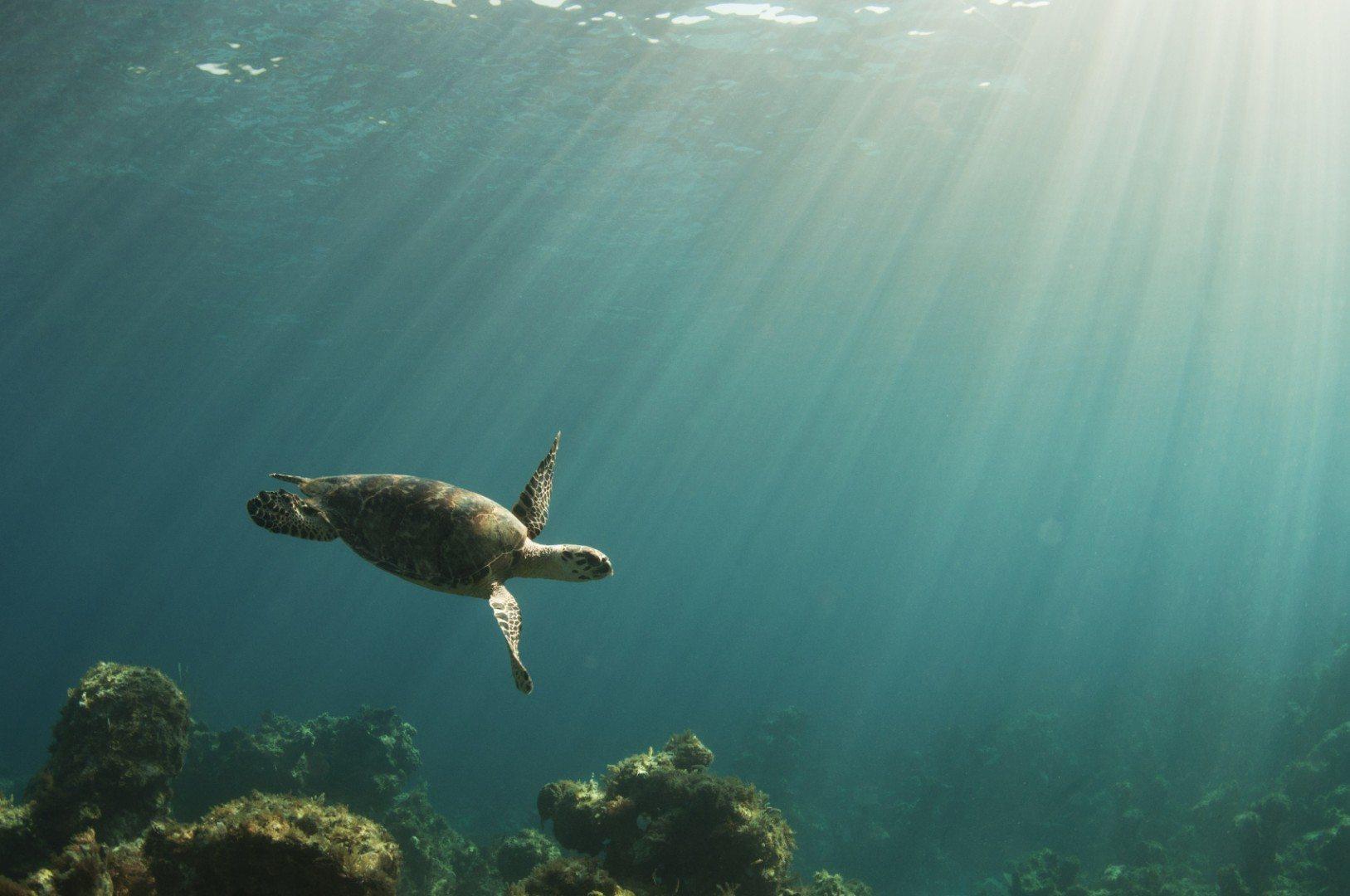 sea turtles bahamas