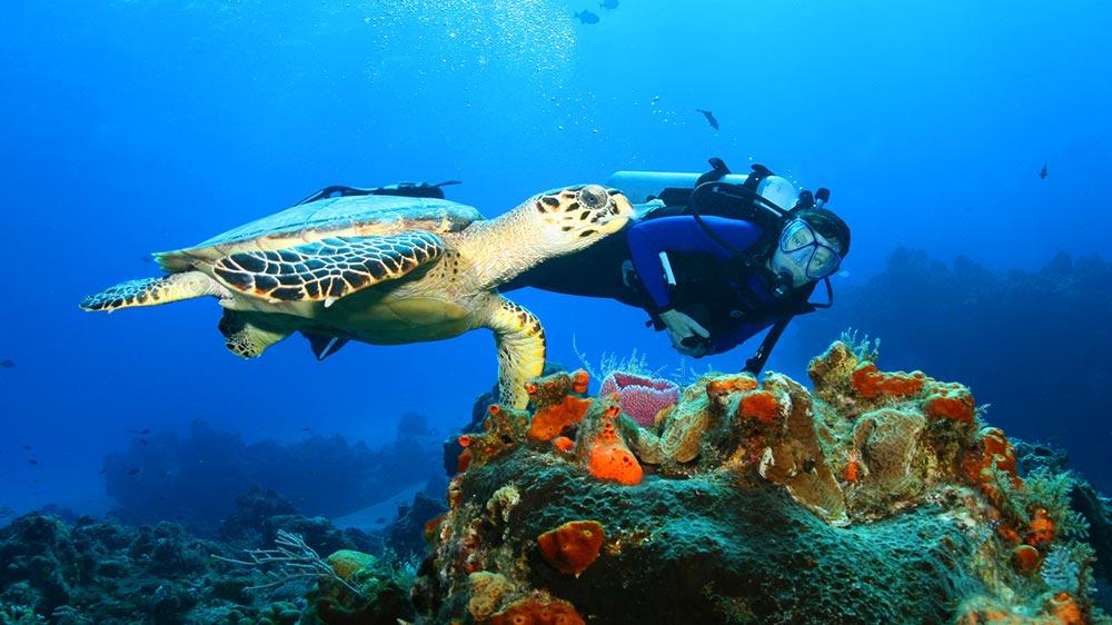 underwater-sea-life-riviera-maya-jan-2016
