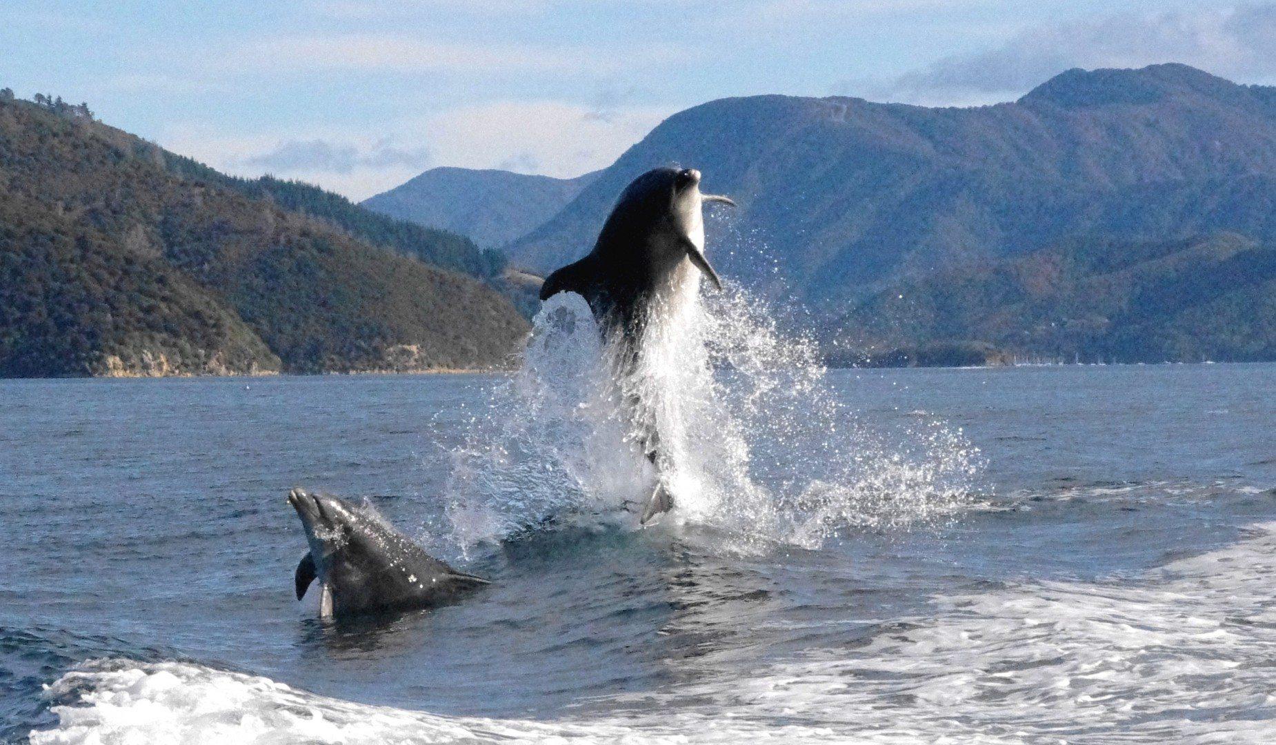 majordomo-bay-of-many-coves-dolphins-on-doorstep