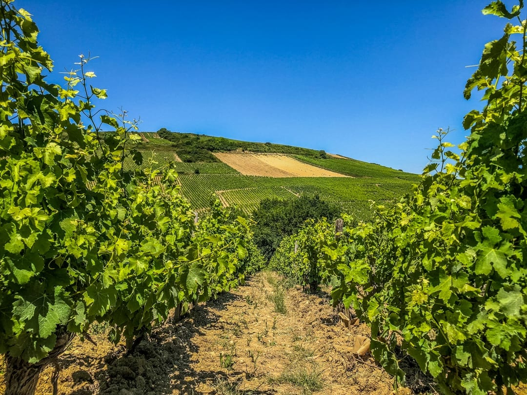 Vineyards-Upper-Loire-Barge-Lady-Cruises-UltraVilla